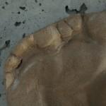 ductal texture washington